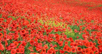 Three Poems You Should Read This Armistice Day