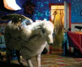 My First Album: Fall Out Boy – Infinity On High